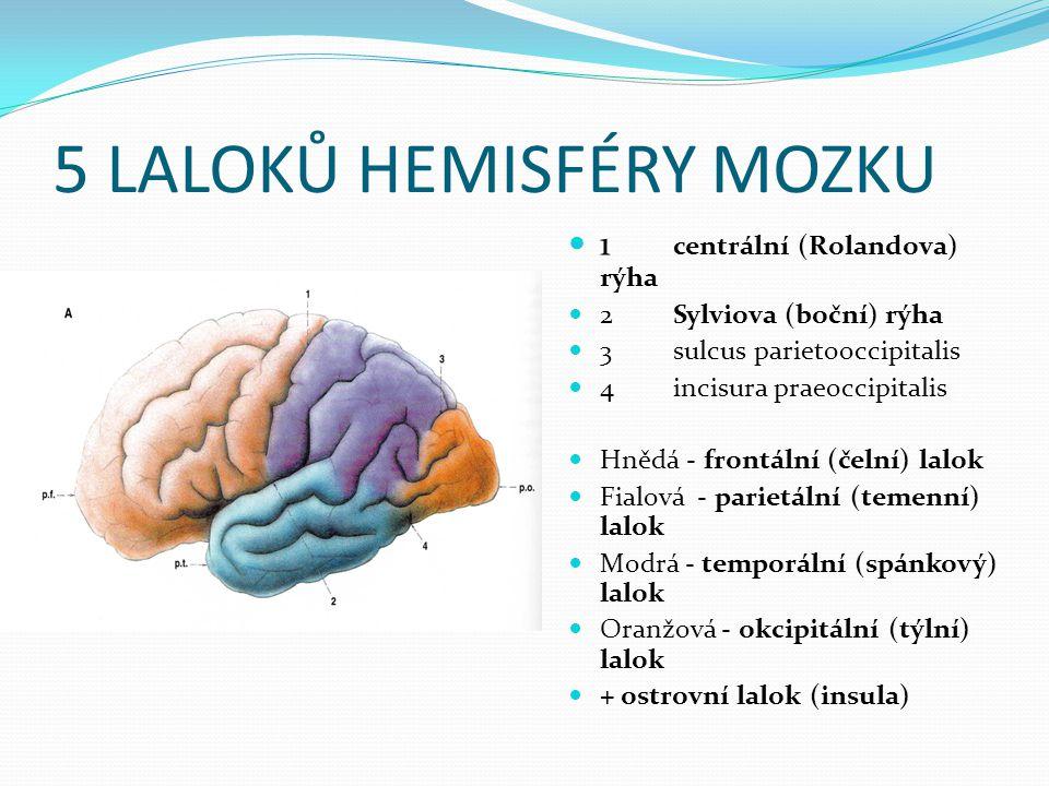 5 LALOKŮ HEMISFÉRY MOZKU