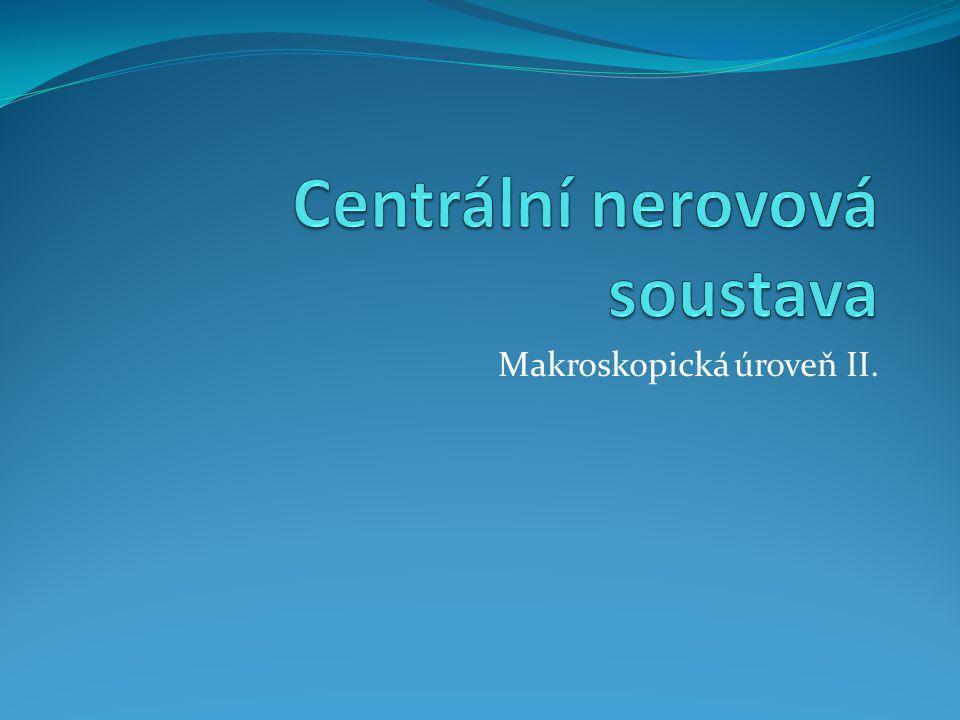 Centrální nerovová soustava