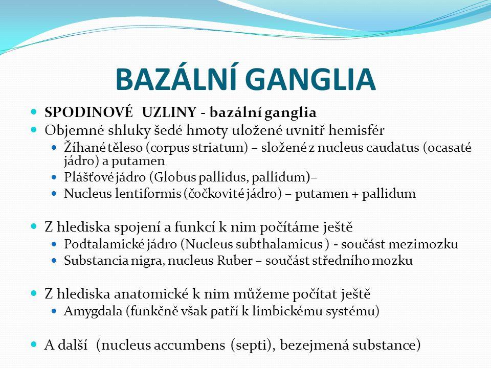 BAZÁLNÍ GANGLIA SPODINOVÉ UZLINY - bazální ganglia