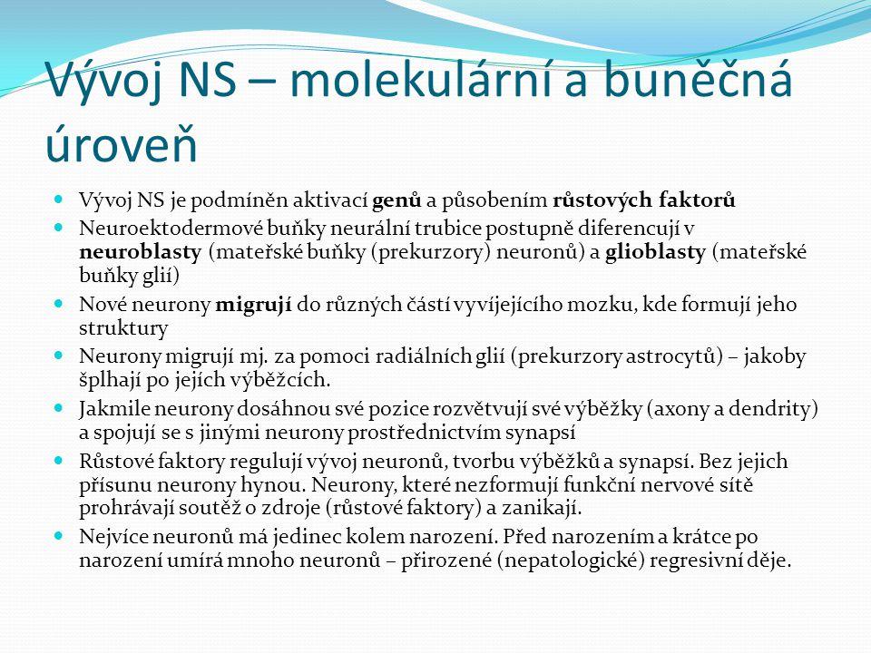Vývoj NS – molekulární a buněčná úroveň