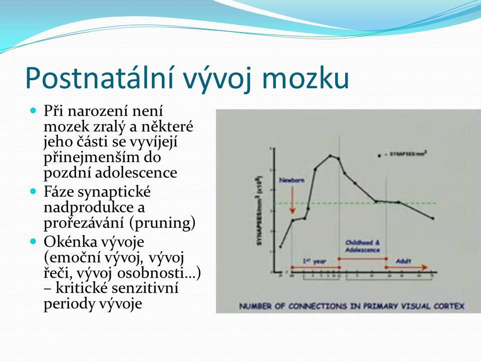 Postnatální vývoj mozku