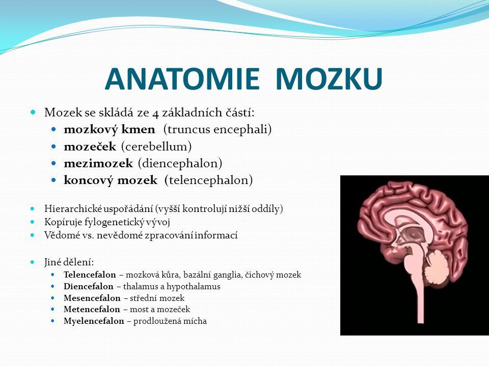 ANATOMIE MOZKU Mozek se skládá ze 4 základních částí: