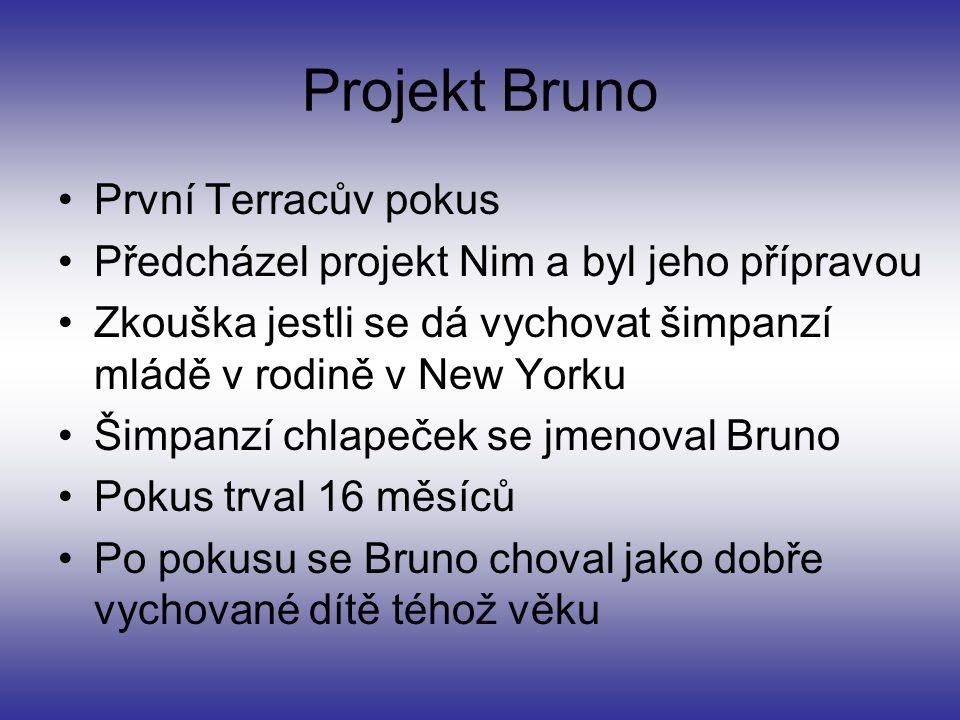Projekt Bruno První Terracův pokus