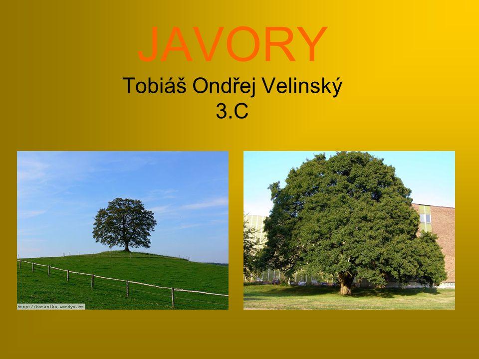 JAVORY Tobiáš Ondřej Velinský 3.C