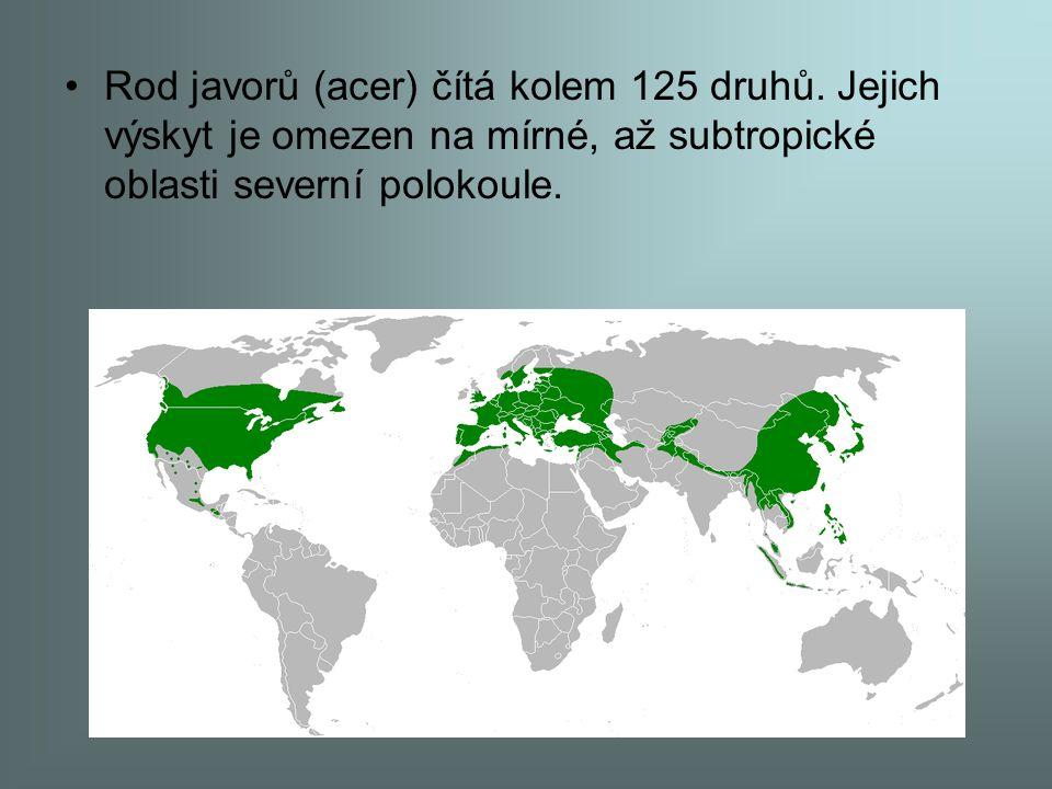 Rod javorů (acer) čítá kolem 125 druhů