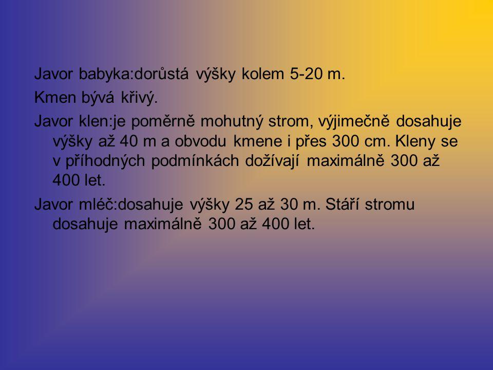 Javor babyka:dorůstá výšky kolem 5-20 m.