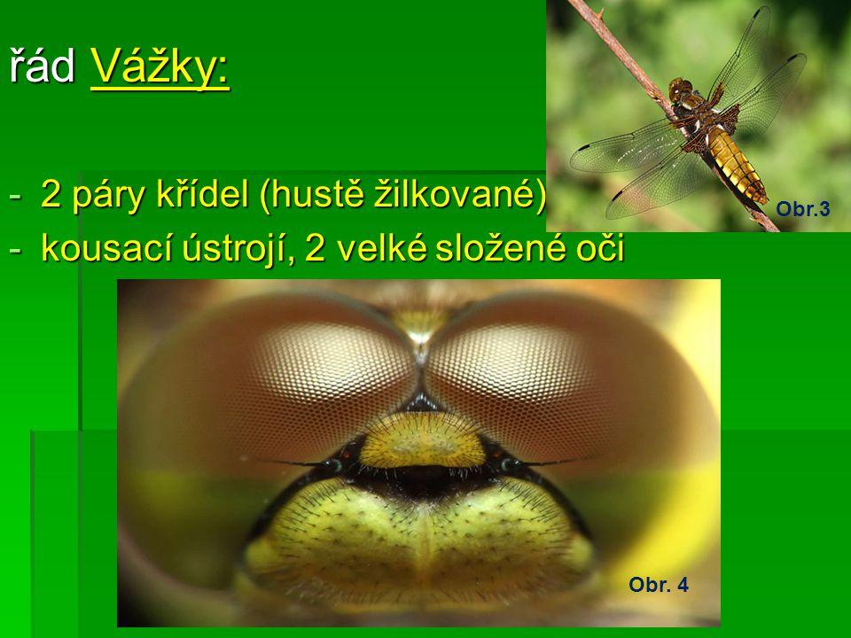 řád Vážky: 2 páry křídel (hustě žilkované)