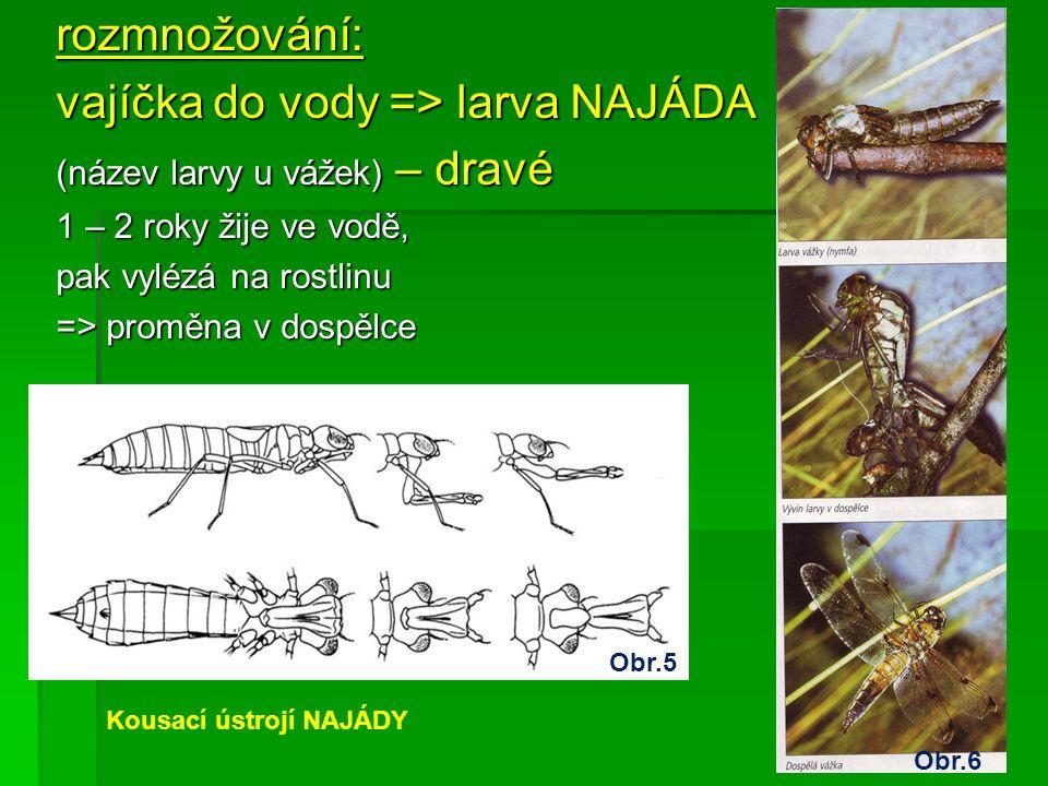 vajíčka do vody => larva NAJÁDA