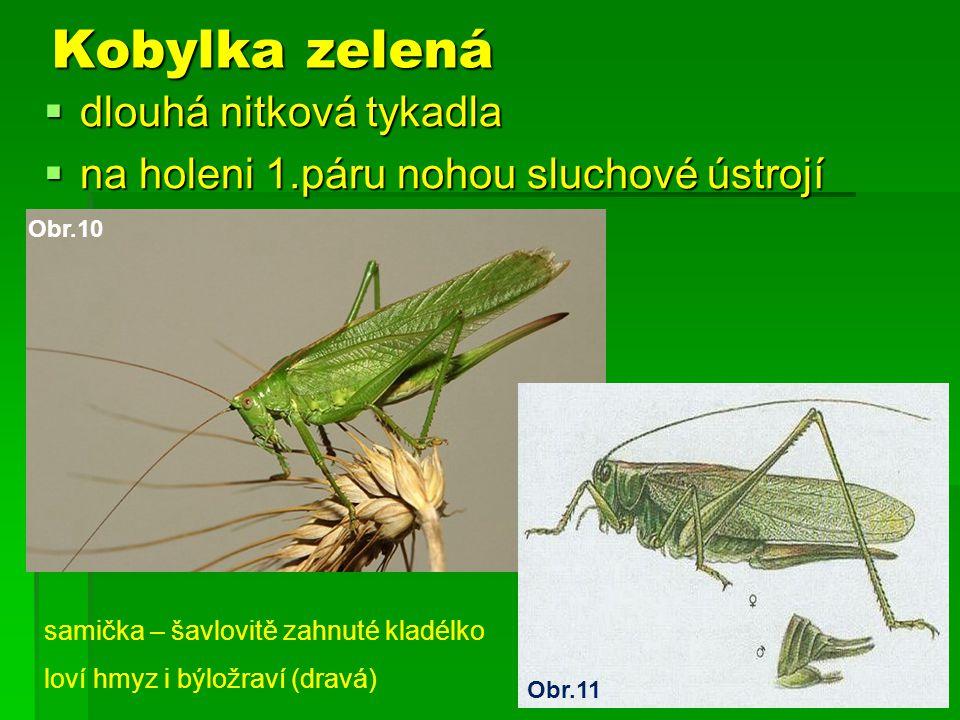 Kobylka zelená dlouhá nitková tykadla