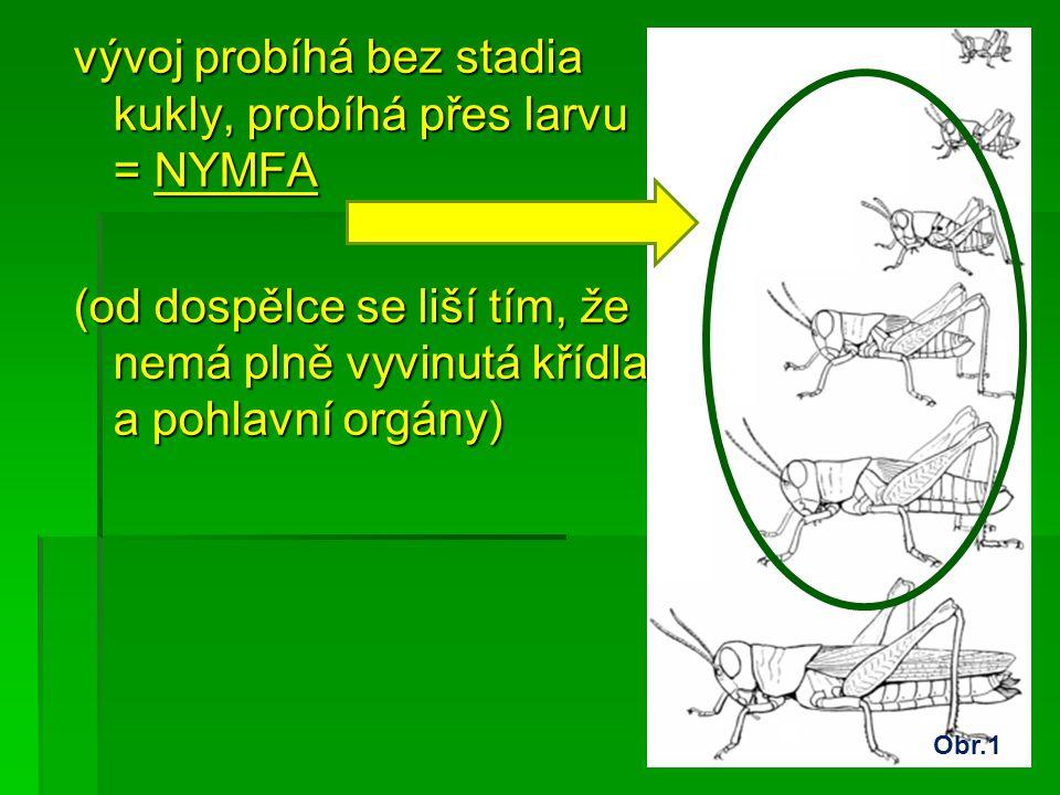 vývoj probíhá bez stadia kukly, probíhá přes larvu = NYMFA