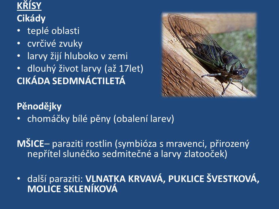 KŘÍSY Cikády. teplé oblasti. cvrčivé zvuky. larvy žijí hluboko v zemi. dlouhý život larvy (až 17let)
