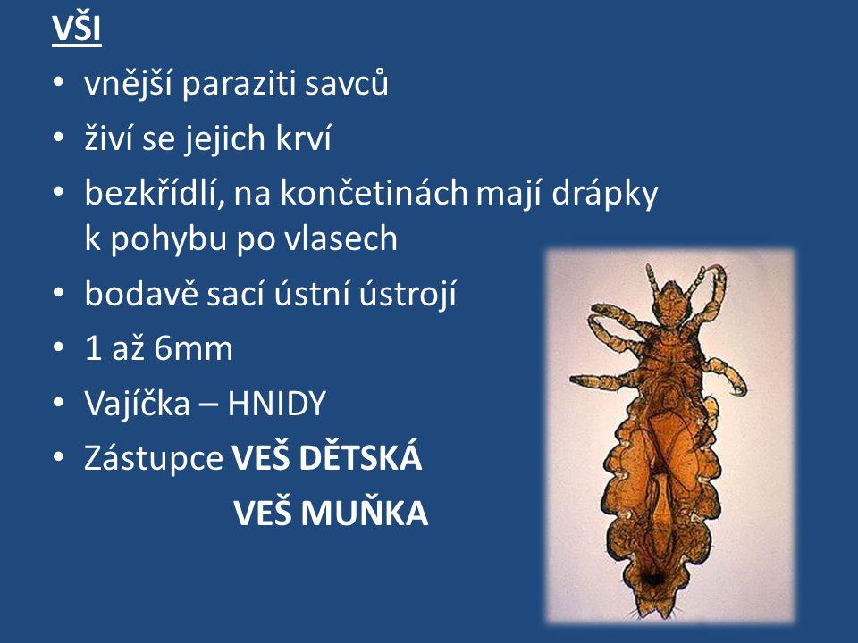 VŠI vnější paraziti savců. živí se jejich krví. bezkřídlí, na končetinách mají drápky k pohybu po vlasech.