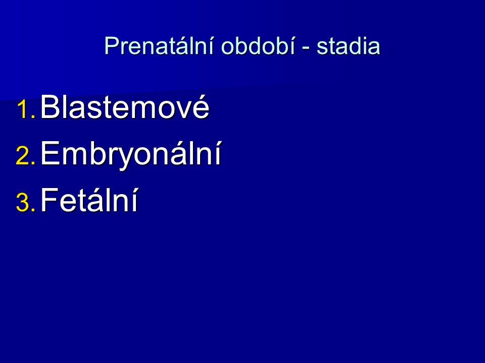 Prenatální období - stadia