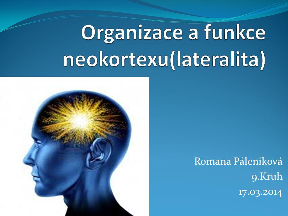 Organizace a funkce neokortexu(lateralita)