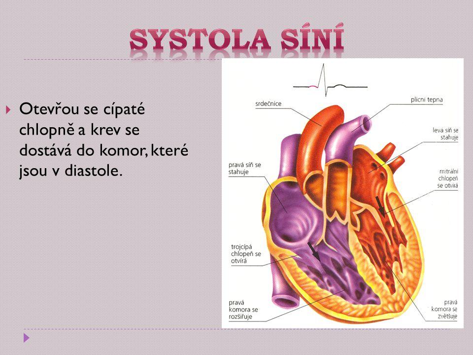 Systola síní Otevřou se cípaté chlopně a krev se dostává do komor, které jsou v diastole.