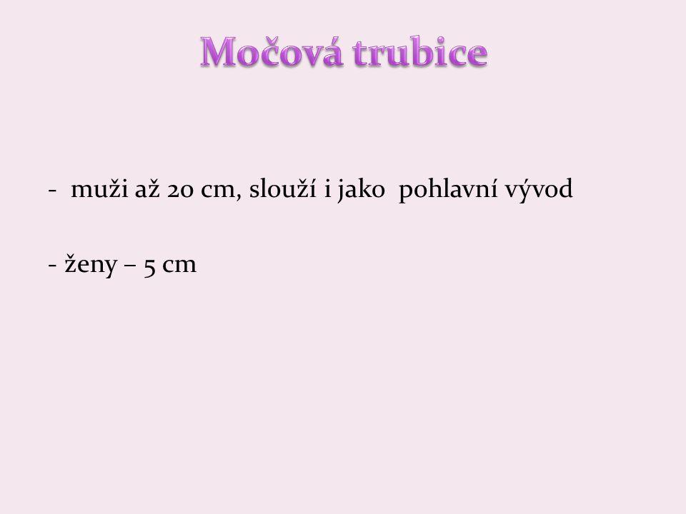 Močová trubice - ženy – 5 cm