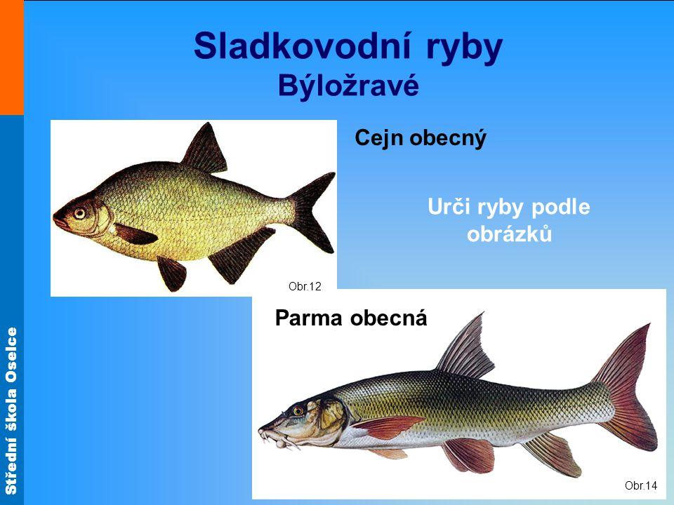 Sladkovodní ryby Býložravé