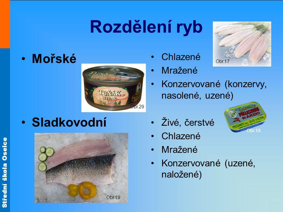 Rozdělení ryb Mořské Sladkovodní Chlazené Mražené