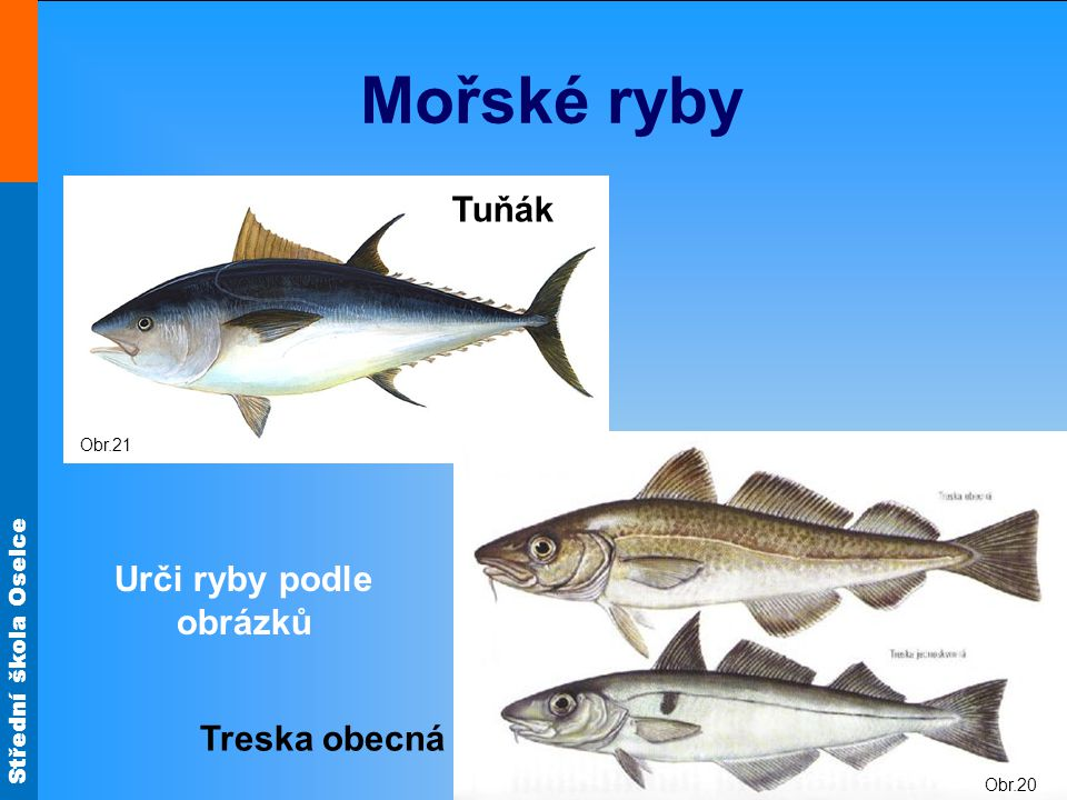 Urči ryby podle obrázků