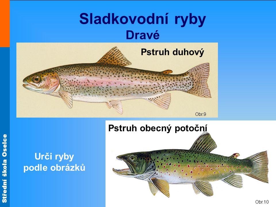 Sladkovodní ryby Dravé