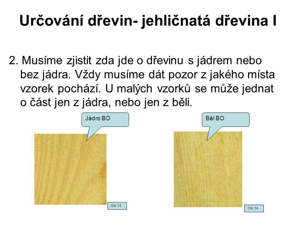 Určování dřevin- jehličnatá dřevina I