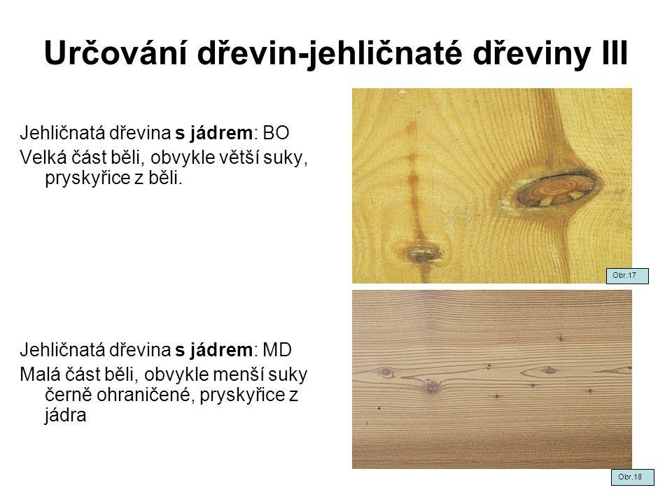 Určování dřevin-jehličnaté dřeviny III
