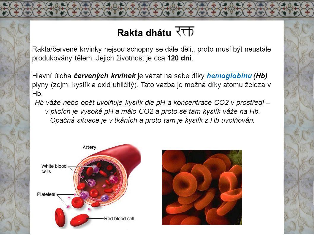 Rakta dhátu Rakta/červené krvinky nejsou schopny se dále dělit, proto musí být neustále produkovány tělem. Jejich životnost je cca 120 dní.
