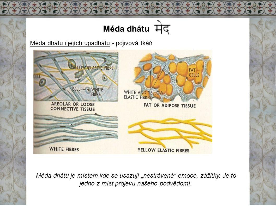Méda dhátu Méda dhátu i jejích upadhátu - pojivová tkáň