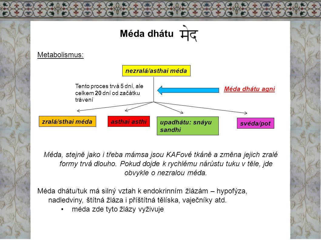 Méda dhátu Metabolismus: