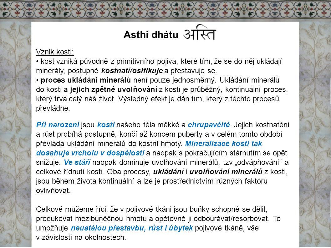 Asthi dhátu Vznik kosti: