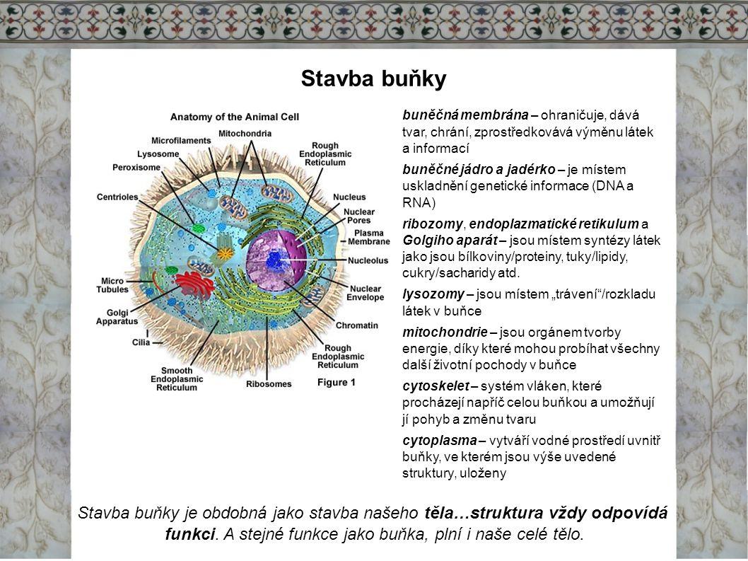 funkci. A stejné funkce jako buňka, plní i naše celé tělo.