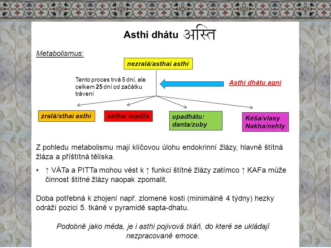Asthi dhátu Metabolismus: