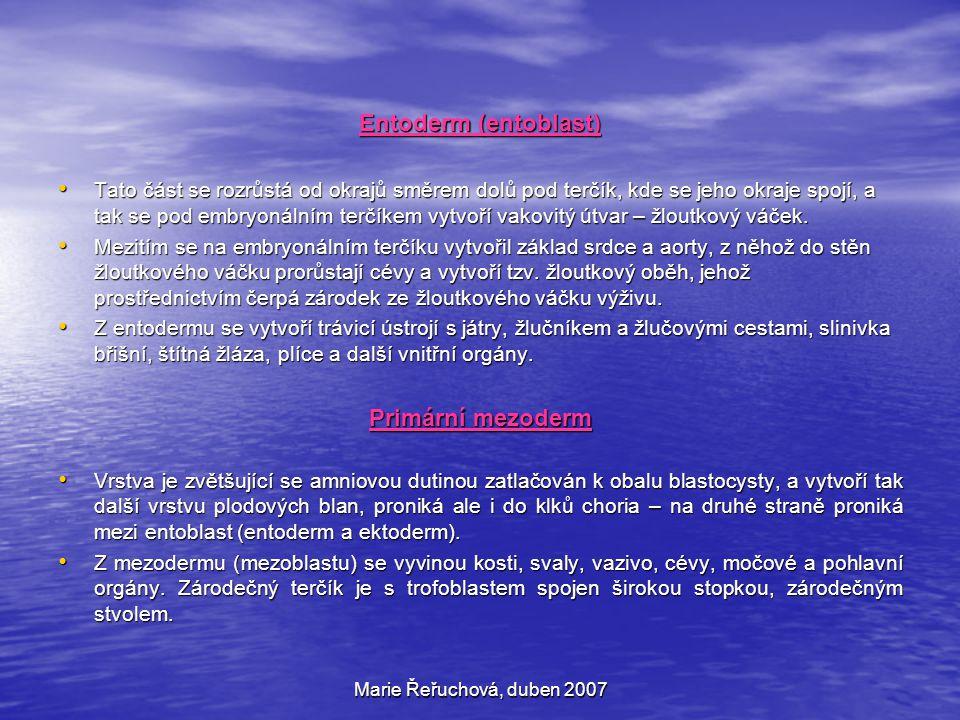 Entoderm (entoblast) Primární mezoderm