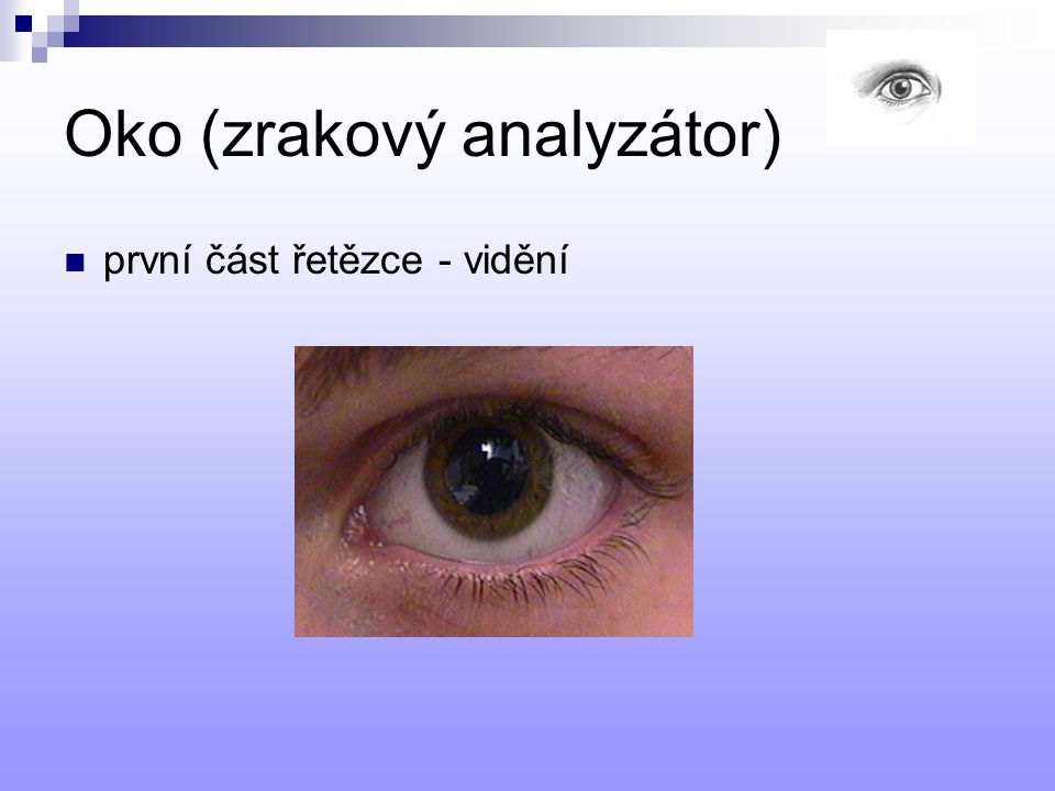 Oko (zrakový analyzátor)