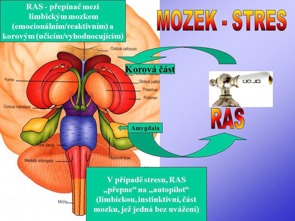 MOZEK - STRES RAS Korová část RAS - přepínač mezi limbickým mozkem