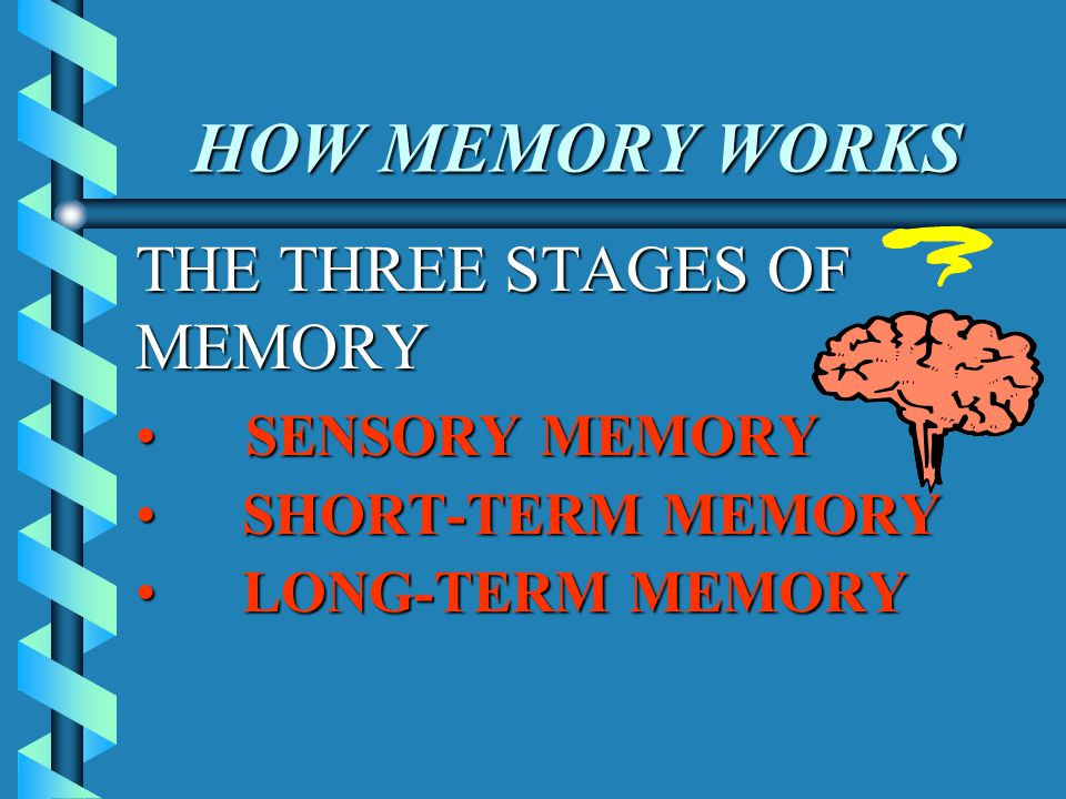 HOW MEMORY WORKS THE THREE STAGES OF MEMORY SENSORY MEMORY