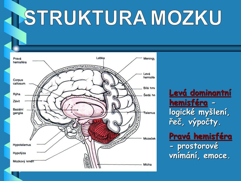 STRUKTURA MOZKU Levá dominantní hemisféra -logické myšlení, řeč, výpočty.