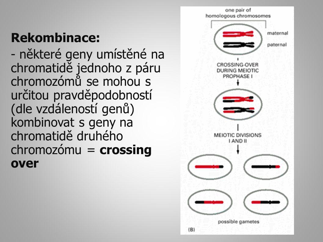 Rekombinace:
