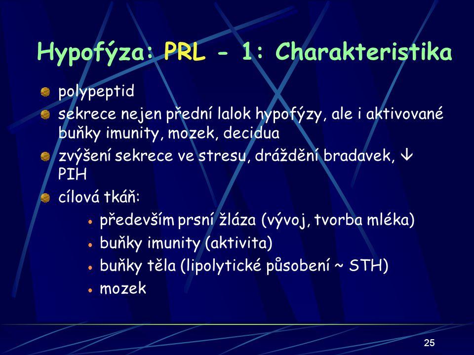 Hypofýza: PRL - 1: Charakteristika