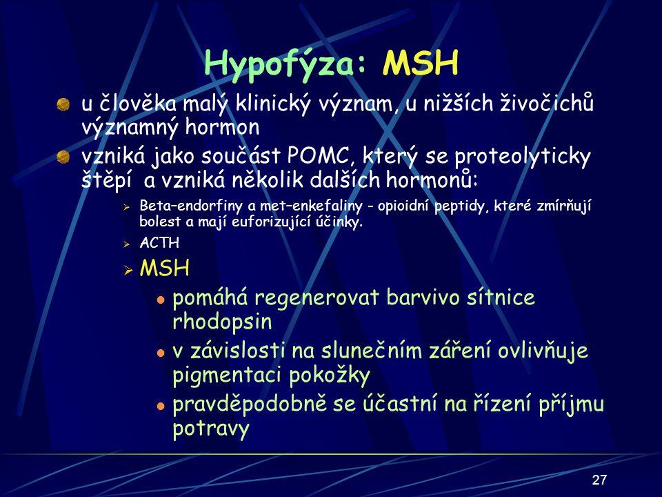 Hypofýza: MSH u člověka malý klinický význam, u nižších živočichů významný hormon.