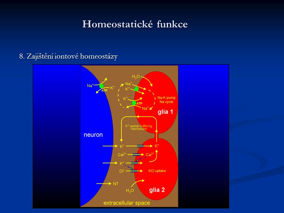 Homeostatické funkce 8. Zajištění iontové homeostázy