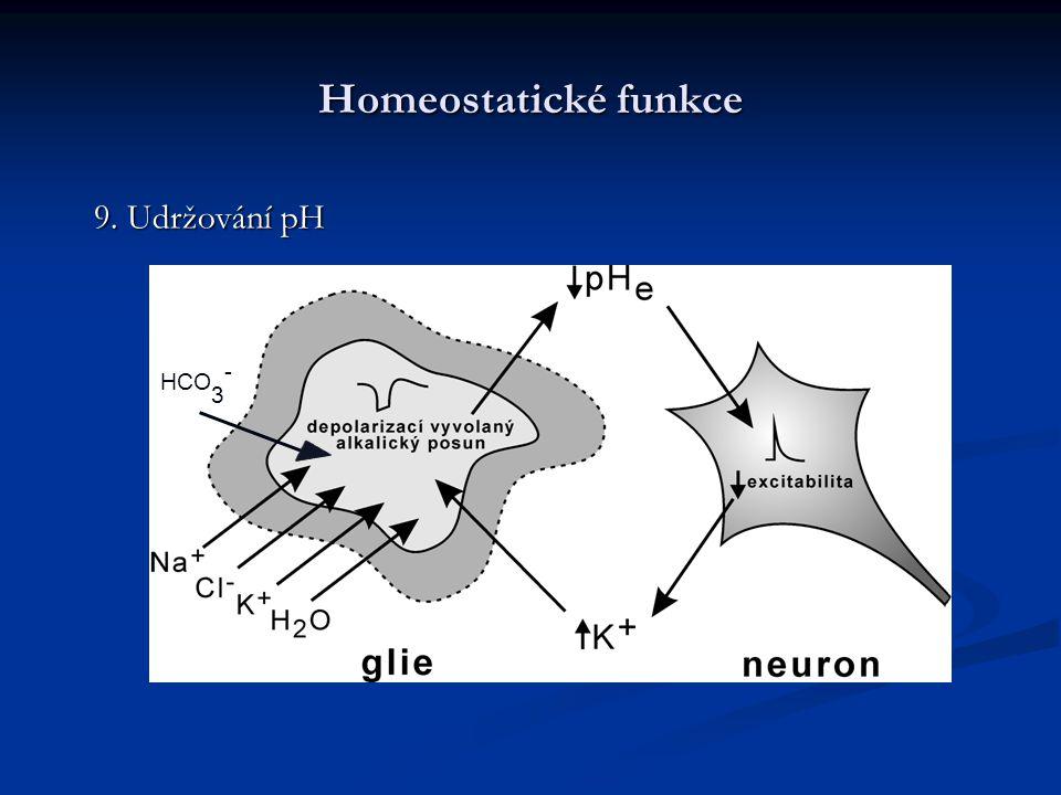 Homeostatické funkce 9. Udržování pH HCO3-
