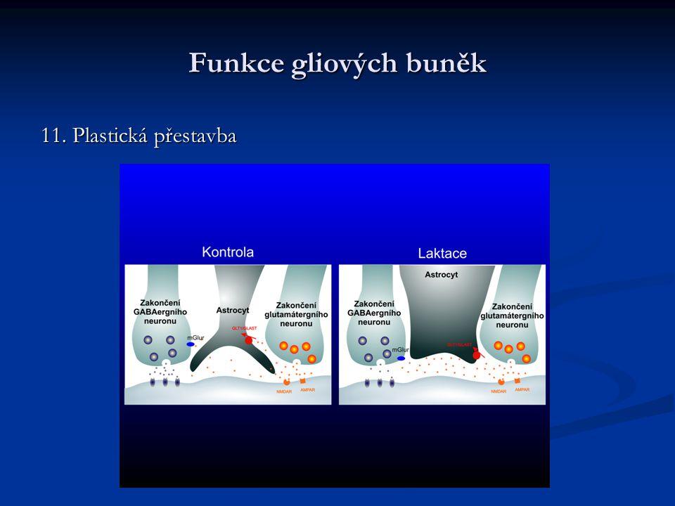 Funkce gliových buněk 11. Plastická přestavba