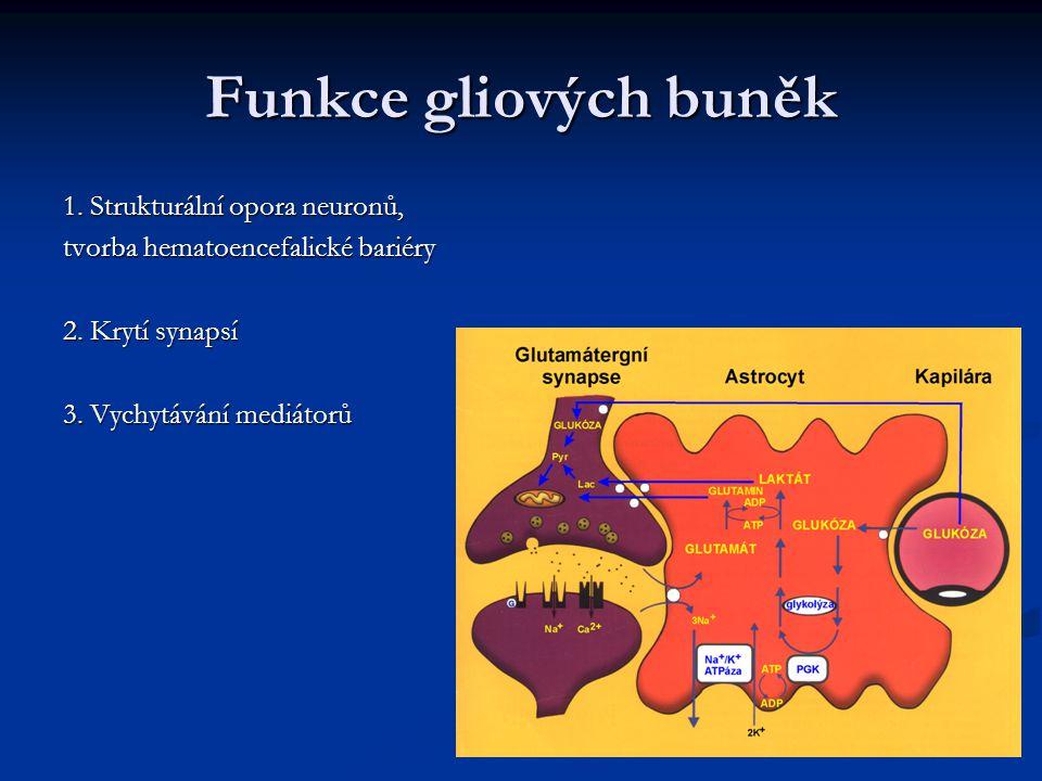 Funkce gliových buněk 1. Strukturální opora neuronů,