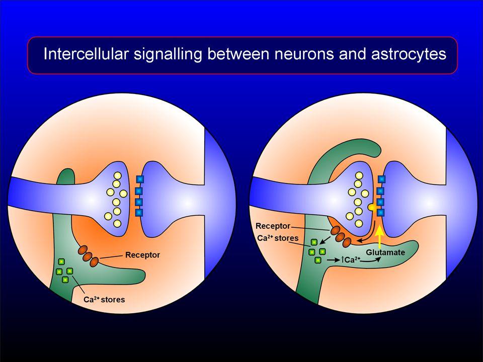 Tvorba neuromediátorů