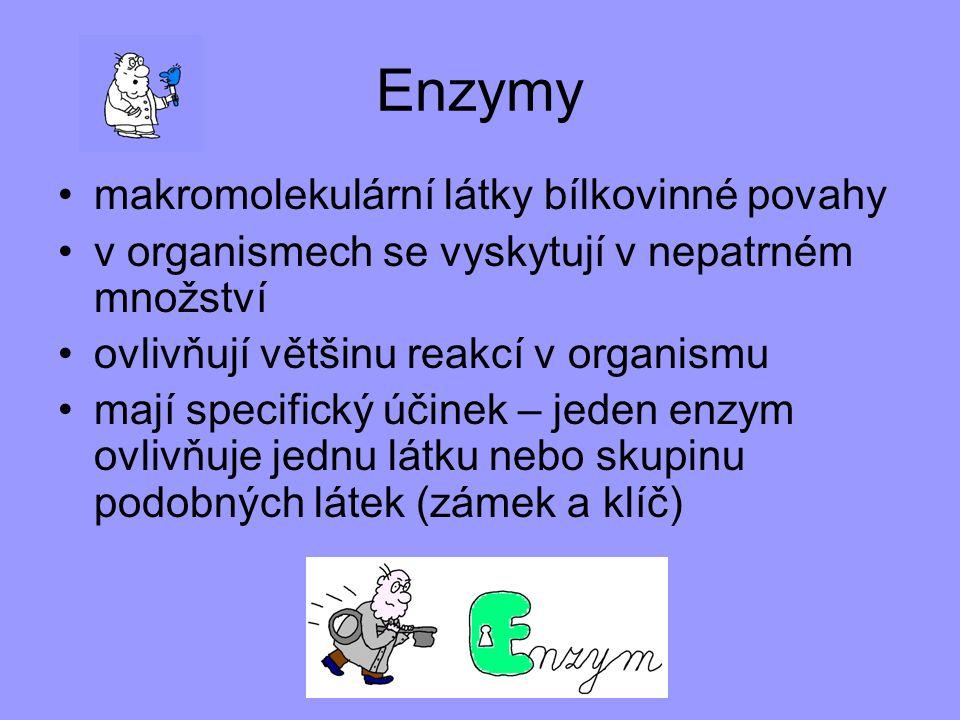 Enzymy makromolekulární látky bílkovinné povahy
