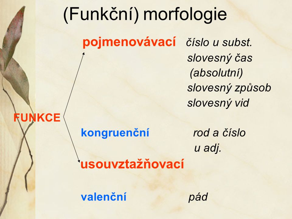 (Funkční) morfologie pojmenovávací číslo u subst. slovesný čas