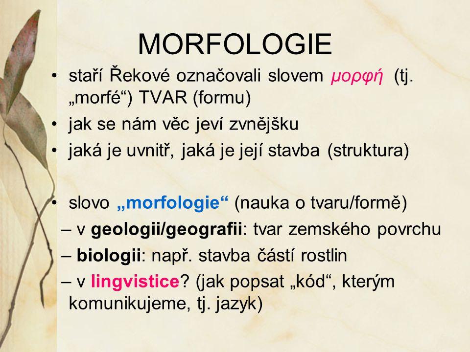"""MORFOLOGIE staří Řekové označovali slovem μορφή (tj. """"morfé ) TVAR (formu) jak se nám věc jeví zvnějšku."""