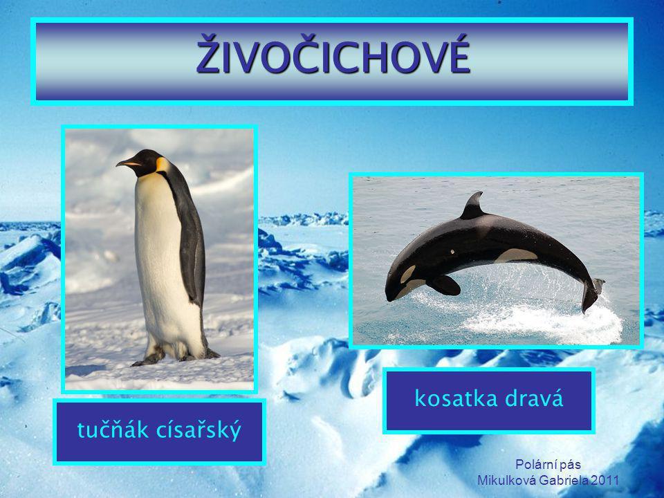 ŽIVOČICHOVÉ kosatka dravá tučňák císařský Polární pás
