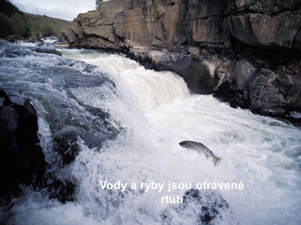 Vody a ryby jsou otrávené rtutí